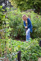 Digging heavy soil in a border in a fruit garden in autumn