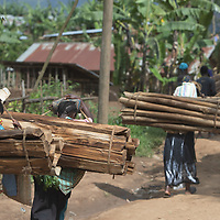 Women carry firewood along the road in Butembo, Congo