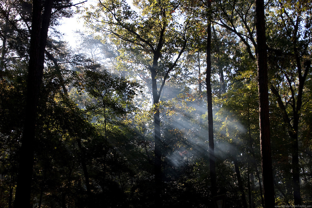 campfire smoke illuminated by rays of light, it's morning in the campground