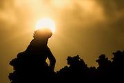 Magic morning light at Galapagos with Iguana in silhuette sgainst sunrise | Magisk morgenlys på Galapagaos med Iguan i silhuett mot soloppgangen.