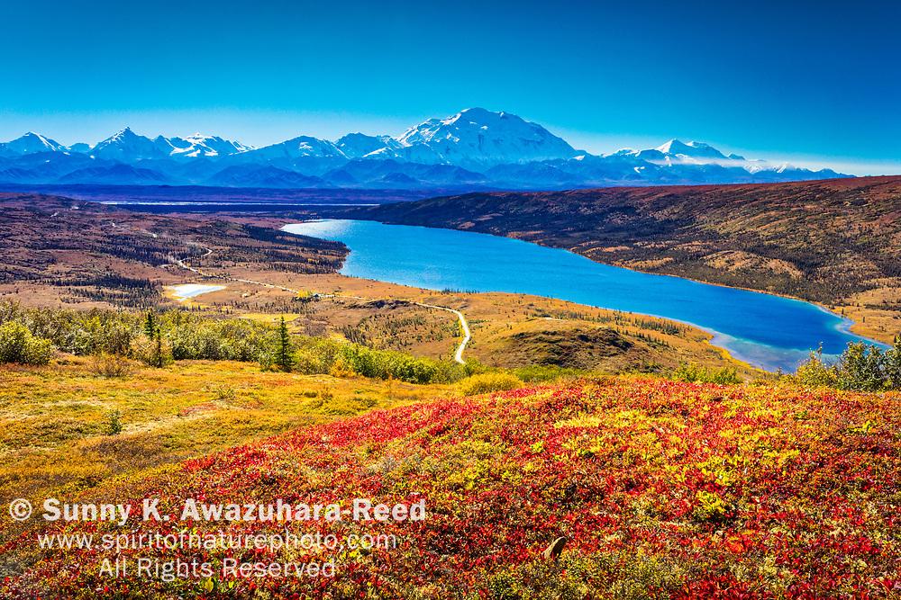 Aerial view of Mt. Denali and Wonder Lake with vivid fall color tundra hill under blue sky. Denali National Park & Preserve, Interior Alaska, Autumn.