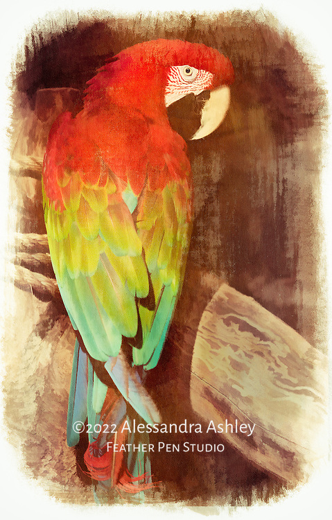 Green-winged macaw in naturalistic habitat.  Blend of painted effects and photorealism.