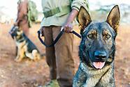 Counter-Poaching Dogs