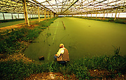 Kevin Anderson, who runs the Austin Water Utility Center for Environmental Research at Hornsby Bend, inspects one of the duckweed covered ponds that are used to reduce the algae levels of the treated wastewater. The water is then returned to outdoor holding ponds that have become famous for attracting migratory birds to the area.
