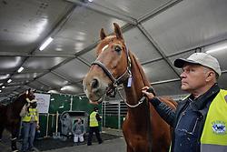Jerich Parzival of Adelinde Cornelissen with Dutch team vet Jan Greve<br /> Alltech FEI World Equestrian Games - Kentucky 2010<br /> © Dirk Caremans