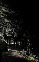 forest road in Mong, south of Egersund - Skogsvei i Mong, sør for Egersund