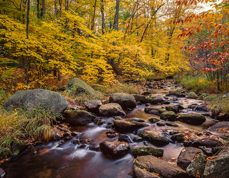 Yellow woods & flowing stream, Willard Brook State Forest, Ashby, MA
