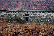 A traditional old croft out-building at Killiemore, Isle of Mull, Scotland. Seen in winter, where the otherwise green bracken is now brown before growth next summer, there is the rusting corrugated roofing and the mossy stone walls that use local materials. The building is only in occasional use for storing farm implements and its small window allows only small amounts of light while retaining what little warmth remains inside.