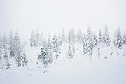 White Fog | Saariselkä, Finland