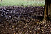 Sao Paulo_SP, Brasil...Folha seca debaixo da arvore no  Parque do Ibirapuera...The dry leaf under a tree in Ibirapuera park...Foto: MARCUS DESIMONI / NITRO