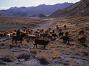 Cowboys and Cattle drive, Cottonwood Wash Road, Kane County, Grand Staircase-Escalante National Monument, Utah.