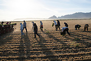 Farming in Deming, New Mexico on May 14, 2020.