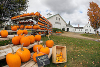 Pumpkins on display at Joe and Cindy Rolfe's in Belmont.  (Karen Bobotas/for the Laconia Daily Sun)