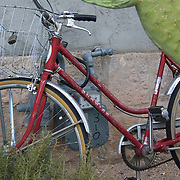 Vintage Schwinn bicycle and prickly pear cactus, Downtown Tucson, Arizona. Bike-tography by Martha Retallick.