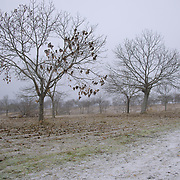 Winter scenery in Portugal's Trás-Os-Montes region, outside Bragança.