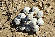 Israel, Negev plains, A pile of snail shells