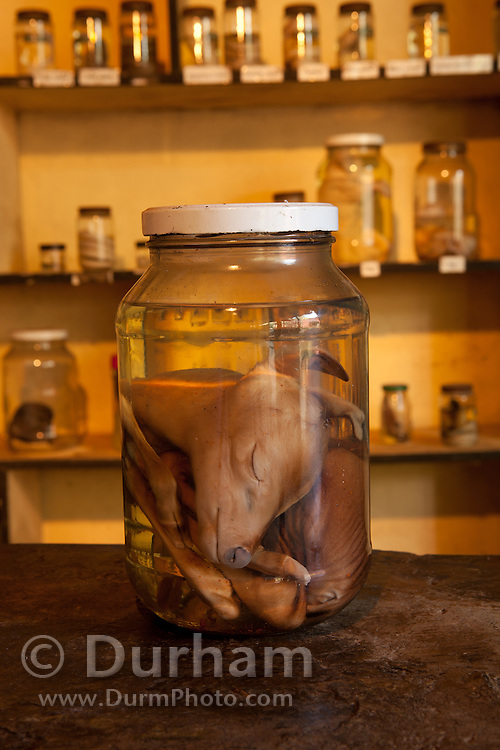 Preserved fetus in part of the education center at the Chiangali Wildlife Orphanage in Bulawayo, Zimbabwe. © Michael Durham / www.DurmPhoto.com