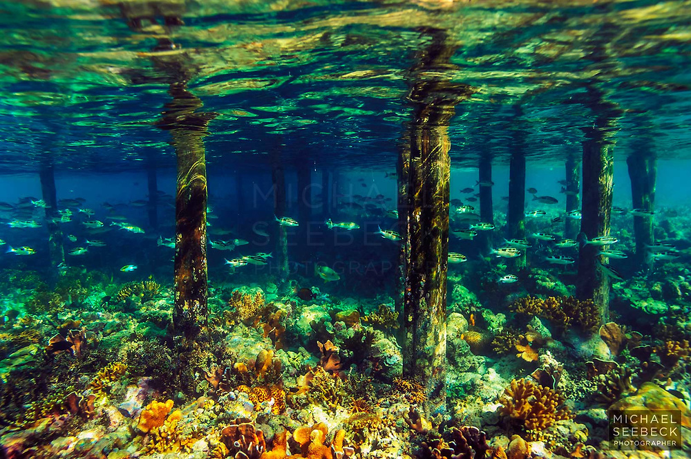 Underwater scene of old jetty pylons emerging from coral reef surrounding an island off West Papua / Irian Jaya<br /> <br /> Open Edition Print / Stock Image