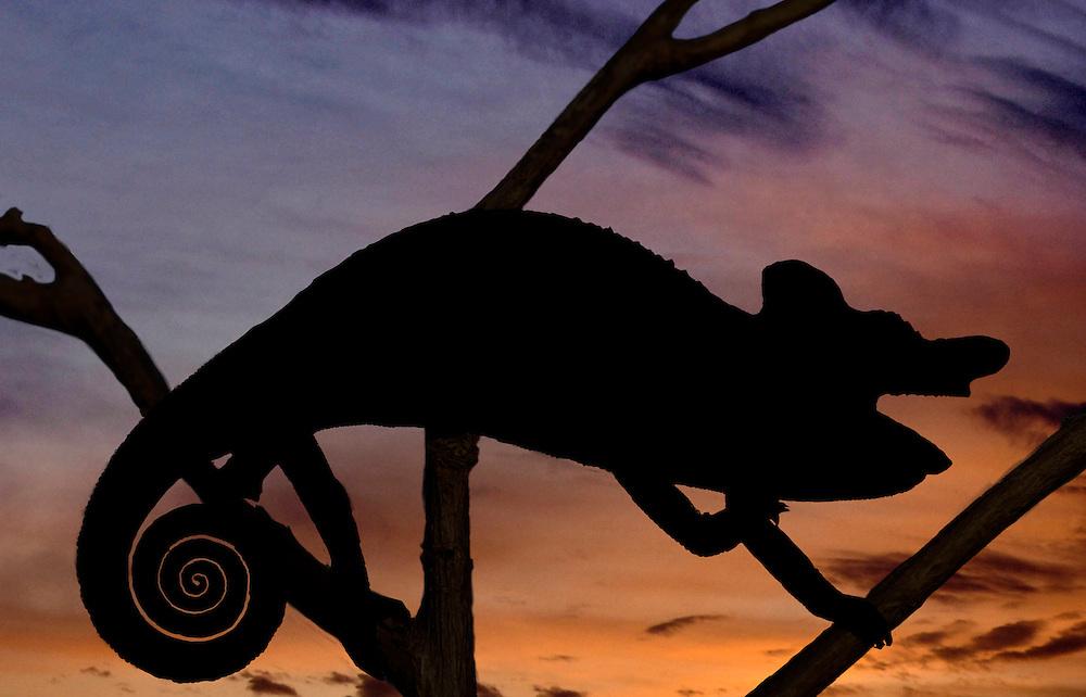 Reptilian Sunset in the Renzoris