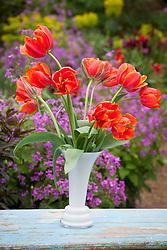 Tulip 'Queensday' in a white vase