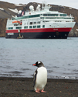 Gentoo Penguin (Pygoscelis papua). Half Moon Island. Image taken with a Leica T camera and 18-56 mm lens.