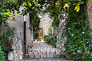 Rustic stone steps and plants in the medieval village of St Paul de Vence, Provence, France