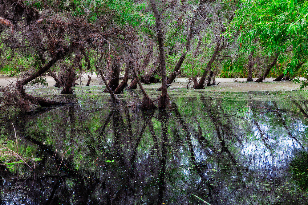 Madrona Marsh Wetlands, Torrance, California