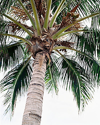 Palm tree, low angle view