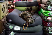 "A dog is sleeping on the stand of his owner who sells ""Doggy Baggs"" at the World Dog exhibition at the Leipzig Trade Fair. Over 31,000 dogs from 73 nations will come together from 8-12 November 2017 in Leipzig for the biggest dog show in the world."