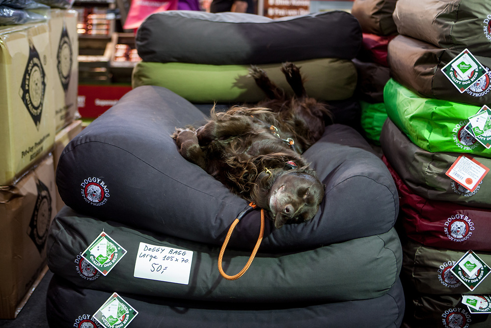 """A dog is sleeping on the stand of his owner who sells """"Doggy Baggs"""" at the World Dog exhibition at the Leipzig Trade Fair. Over 31,000 dogs from 73 nations will come together from 8-12 November 2017 in Leipzig for the biggest dog show in the world."""