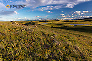 Prairie reef with wildflowers in the evening along the Rocky Mountain Front near Augusta, Montana, USA