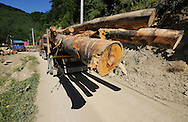 Logging trucks bringing out the wood from the prieaval forests of Romania, Tarky mountains Natura 2000 site, Southern Carpathians, Romania, Rewilding Europe site