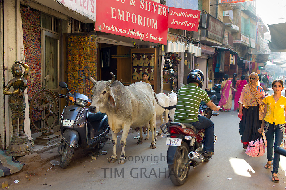 Crowded street scene people, cows, traffic at Sardar Market at Girdikot, Jodhpur, Rajasthan, Northern India