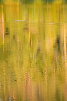 Trees reflected in warm glow of evening light, Black Pine Lake Okanogan National Forest Washington USA