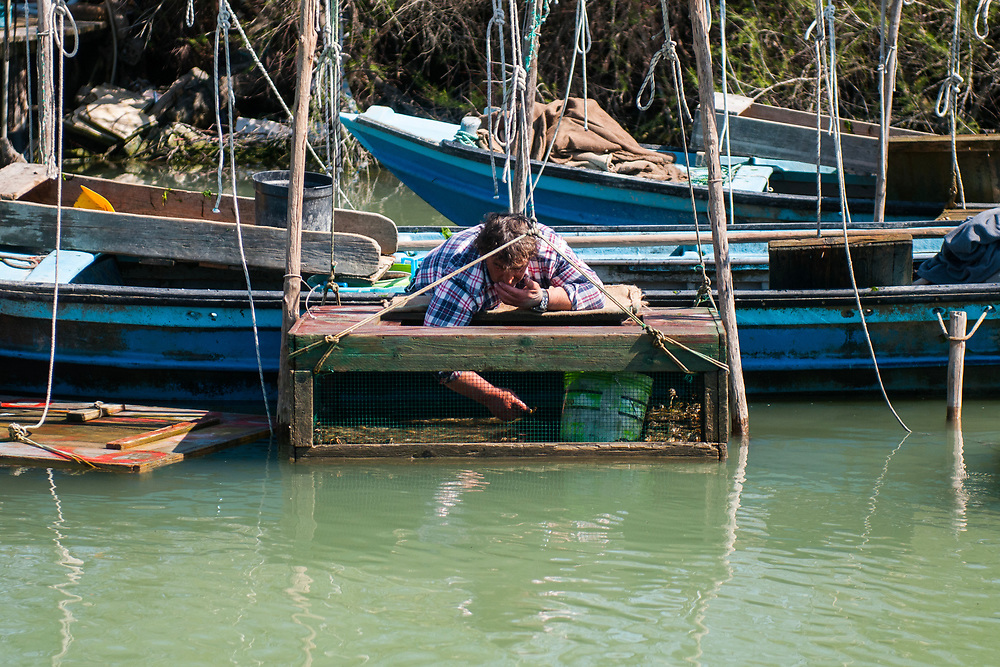 VENICE, ITALY - APRIL 2018. <br /> 'Moecanti', crabs fishermen, work in their fishing area with 'vieri', wooden boxes where the fisherman check the state of the crabs, during the fishing tour.