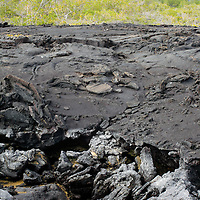 South America, Ecuador, Galapagos Islands. Volcanic landscape of Fernandina Island.