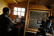 DEU, Deutschland: Biene, Honigbiene (Apis mellifera), Biologiestudent Hartmut Vierle in einer Hütte mit Beobachtungsstock, das Leben im Bienenstock wird mittels eines Camcorders aufgezeichnet, Hartmut Vierle beobachtet am Monitor das Verhalten, Bienenstation an der Bayerischen Julius-Maximilians-Universität Würzburg | DEU, Germany: Bee, Honey-bee (Apis mellifera), Biology student Hartmut Vierle in a hut with a observiation beehive, the life in the beehive will be monitored and recorded by camcorders, Hartmut Vierle is observing the behaviour at the monitor, Beestation at the Bavarian Julius-Maximilians-University Würzburg
