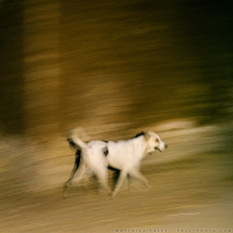 A dog comes out at night in an empoverished part of town.