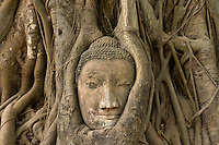Head of the sandstone Buddha, Wat Mahathat, Ayutthaya Historical Park, Ayutthaya, near Bangkok, Thailand