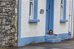 Can on doorstep, Kinvarra, County Galway, Ireland