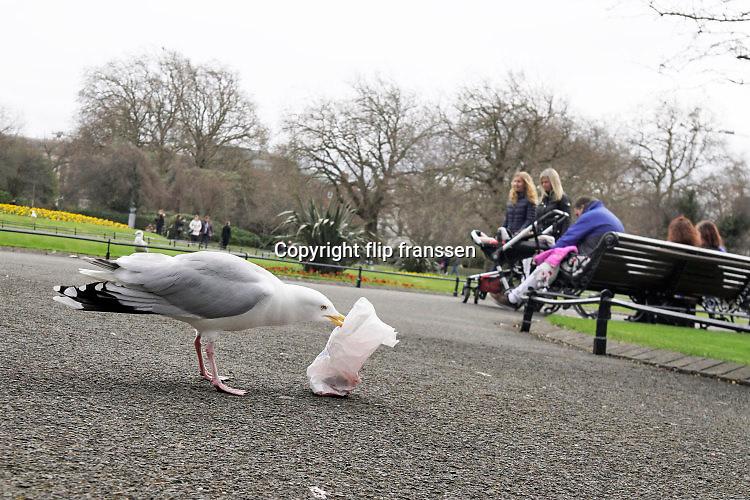 Ierland, Dublin, 26-3-2018Een meeuw heeft een plastic zak uit een prullenbak, afvalbak, gehaald en probeert het eten wat weggegooid is en er nog in zit eruit te halen .Foto: Flip Franssen