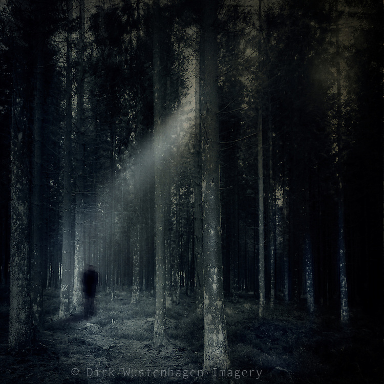 Mystical forest scenery.