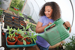 Girl watering plants in a tray