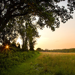 The sun sets behind a row of trees in a hay field in Bridgewater, Massachusetts.  Summer.