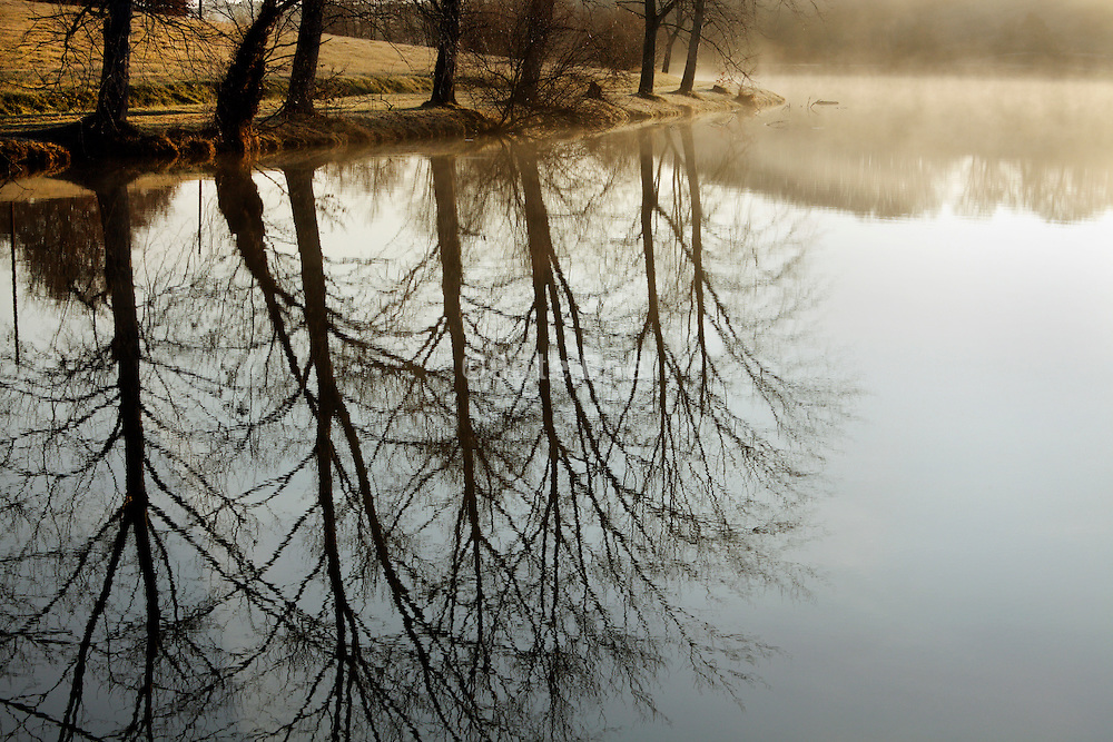 early morning water dampness with trees by a lake