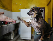 Chula , sitting on a kitchen counter, shakes hands with Nora García. Aniplant, Cuba.