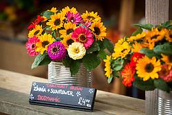 Cut flowers in a tin vase. Zinnia 'Giant Dahlia Mix' and sunflower Helianthus annuus 'Sonja'