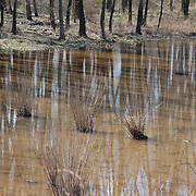 There are so many elements to this image, the rushes, the flooding, the reflections.  D and R Canal, Hillsborough, NJ