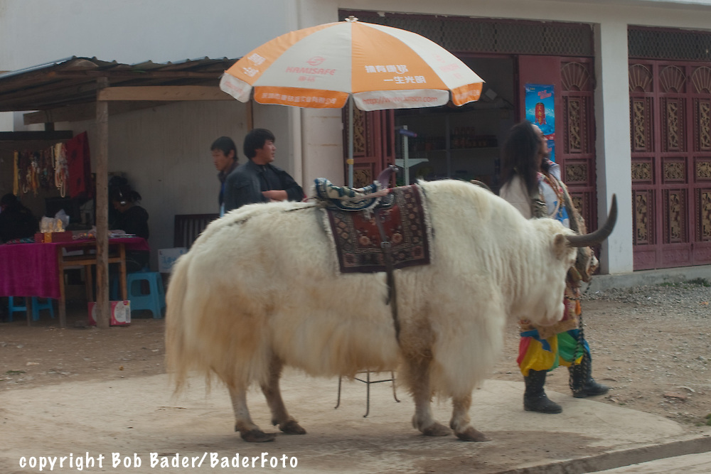 Tibetan with a Yak to rent for a ride in Shangri-La China