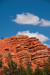 USA Utah, Red Canyon in Dixie National Forest near Zion National Park.